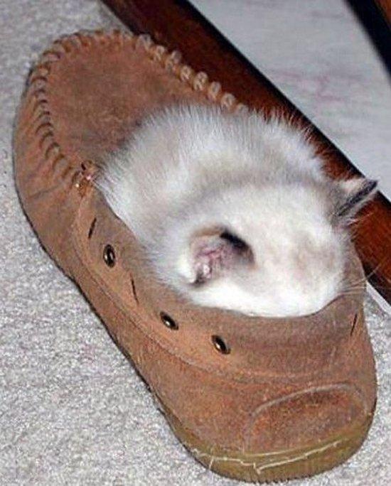 Παπουτσωμένες γάτες (3)