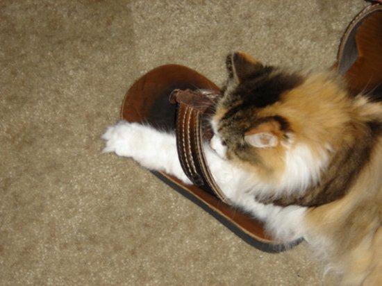 Παπουτσωμένες γάτες (4)