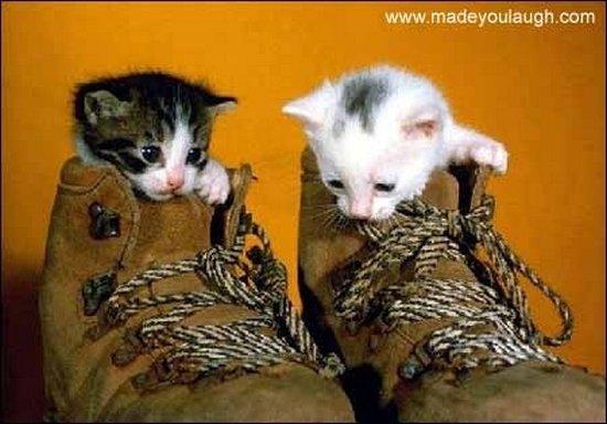 Παπουτσωμένες γάτες (6)