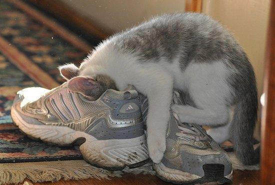 Παπουτσωμένες γάτες (8)