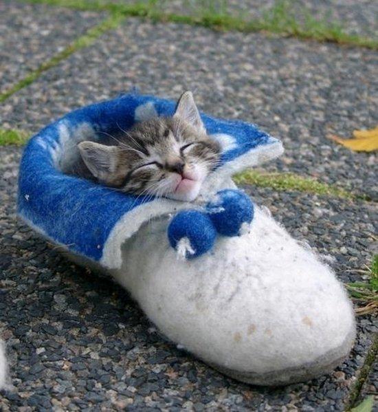 Παπουτσωμένες γάτες (10)