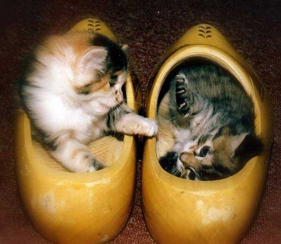 Παπουτσωμένες γάτες (11)