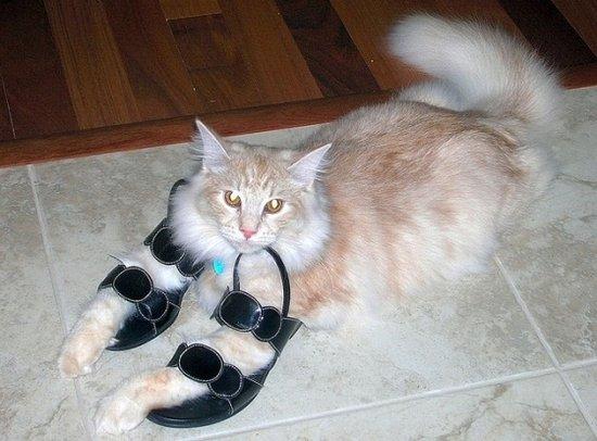 Παπουτσωμένες γάτες (12)
