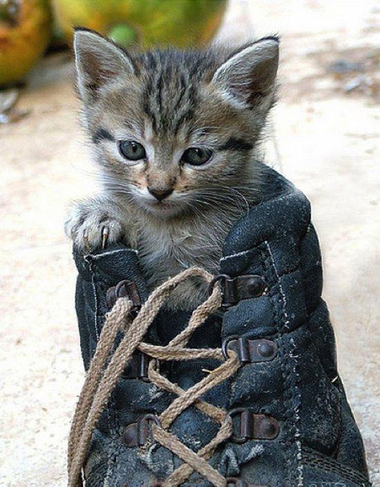 Παπουτσωμένες γάτες (16)