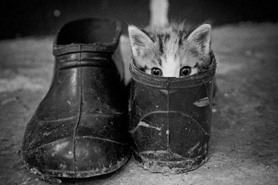 Παπουτσωμένες γάτες (17)