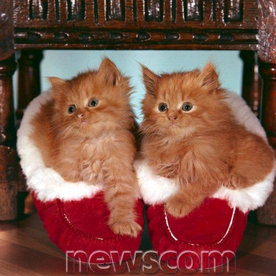 Παπουτσωμένες γάτες (18)