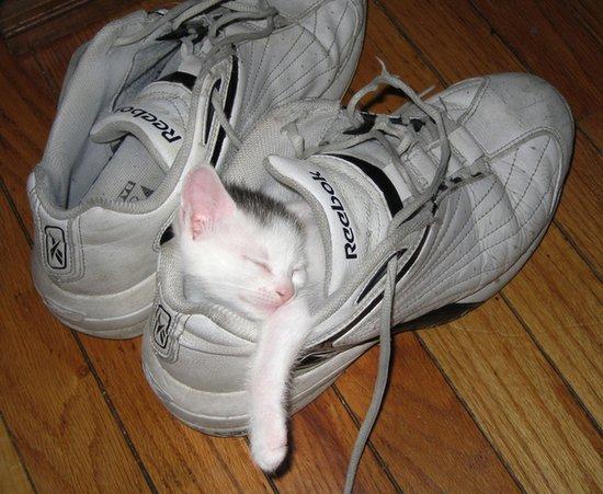 Παπουτσωμένες γάτες (21)