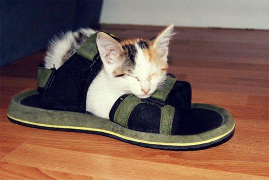 Παπουτσωμένες γάτες (22)
