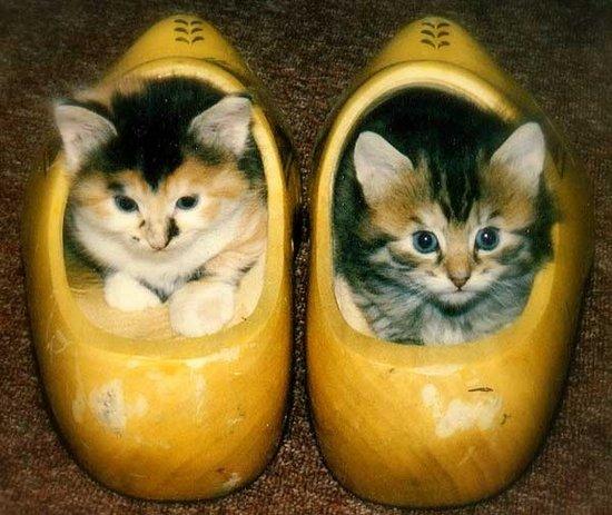 Παπουτσωμένες γάτες (23)
