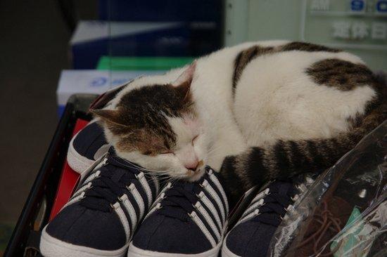 Παπουτσωμένες γάτες (25)