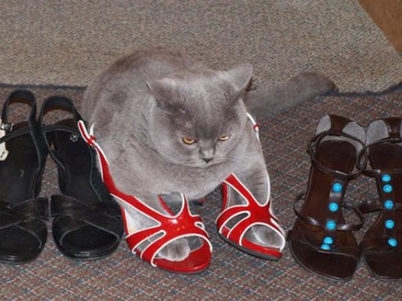 Παπουτσωμένες γάτες (26)
