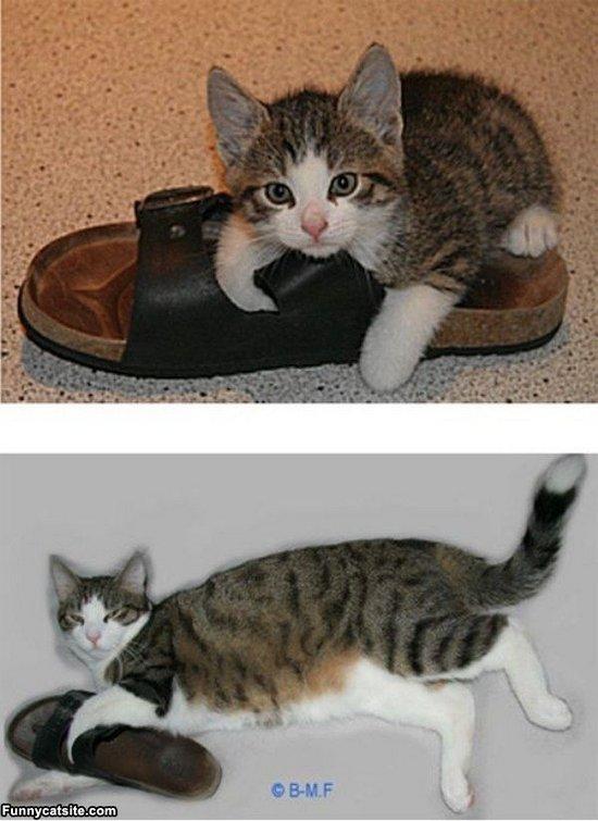 Παπουτσωμένες γάτες (27)