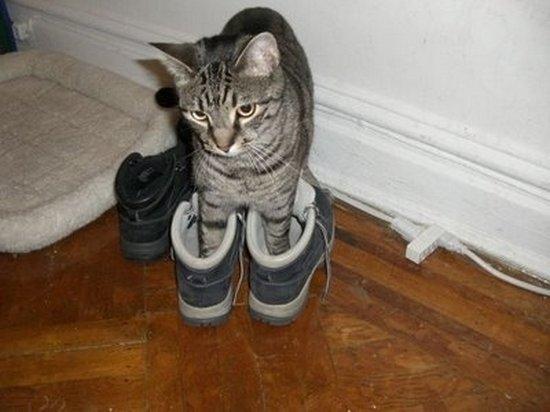 Παπουτσωμένες γάτες (29)
