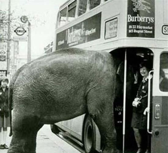 Τα πιο παράξενα περιστατικά στο λεωφορείο (14)