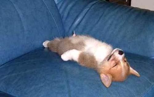 Παράξενες στάσεις ύπνου για σκύλους (1)
