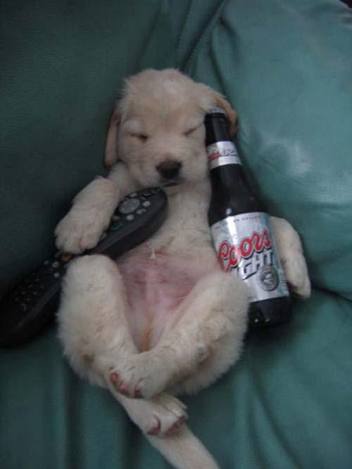 Παράξενες στάσεις ύπνου για σκύλους (10)