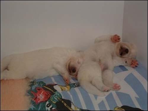 Παράξενες στάσεις ύπνου για σκύλους (20)