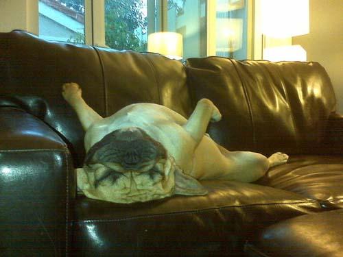 Παράξενες στάσεις ύπνου για σκύλους (30)