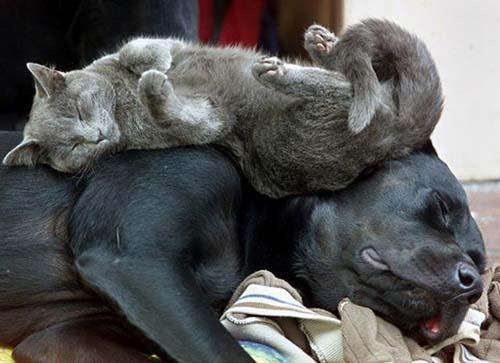 Παράξενες στάσεις ύπνου για σκύλους (34)