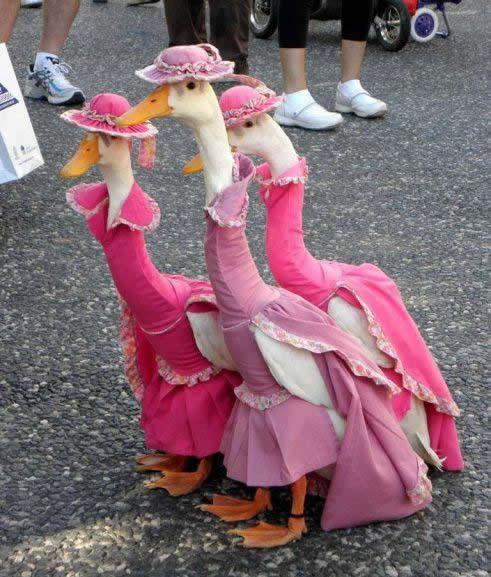 Φωτογραφία της ημέρας: Οι κυρίες με τα ροζ