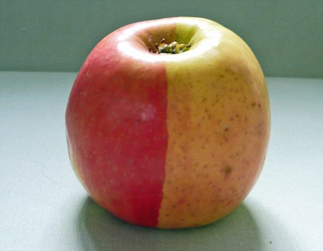 Φωτογραφία της ημέρας: Παράξενο μήλο
