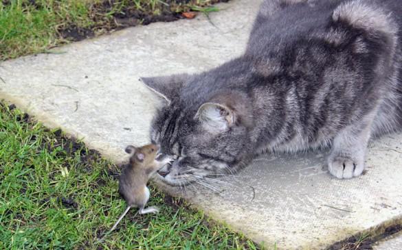 Φωτογραφία της ημέρας: Tom & Jerry