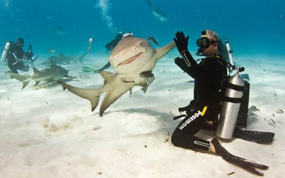 Φωτογραφία της ημέρας: Καρχαρίας κάνει high-five με δύτη