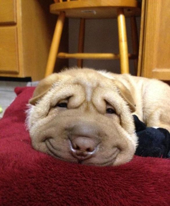 Φωτογραφία της ημέρας: Χαμογελαστός σκύλος
