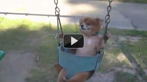 Σκύλοι σε κούνιες