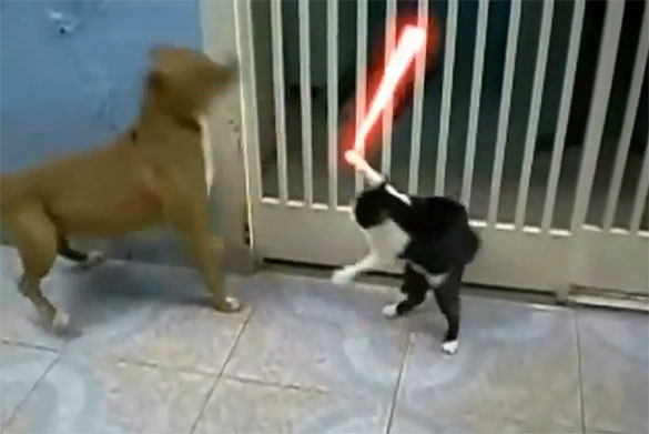 Star Wars: Γάτα vs Σκύλων