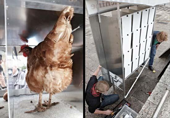 Ένας αλλιώτικος αυτόματος πωλητής αυγών (4)