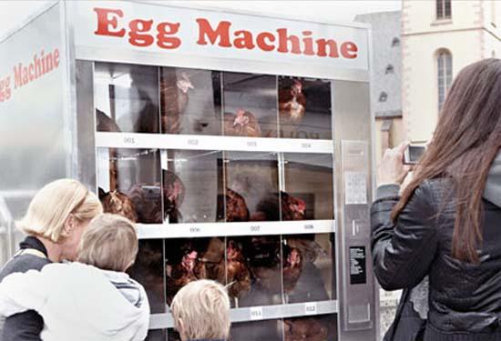 Ένας αλλιώτικος αυτόματος πωλητής αυγών (5)