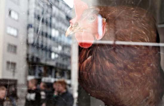 Ένας αλλιώτικος αυτόματος πωλητής αυγών (6)