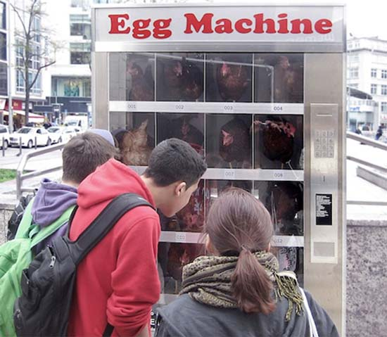 Ένας αλλιώτικος αυτόματος πωλητής αυγών (7)