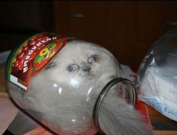 Απίθανες γάτες σε παράξενες, αστείες