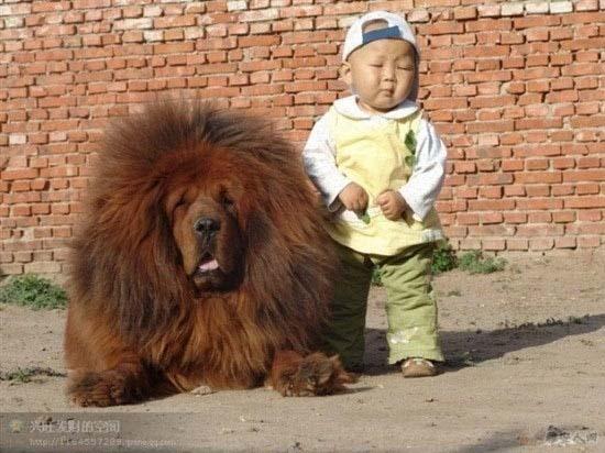Ανεξήγητες φωτογραφίες με σκύλους (3)