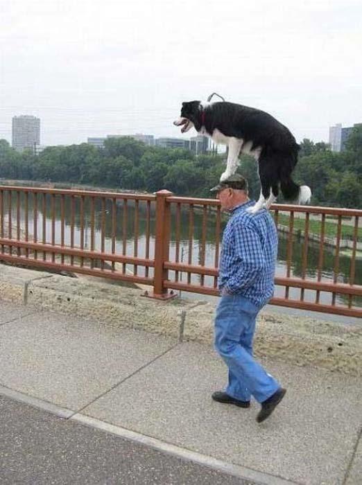 Ανεξήγητες φωτογραφίες με σκύλους (11)