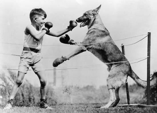 Ανεξήγητες φωτογραφίες με σκύλους (13)
