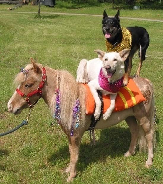 Ανεξήγητες φωτογραφίες με σκύλους (15)