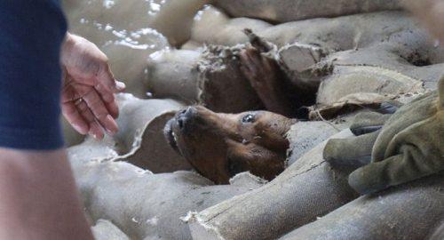 Η ασυνήθιστη διάσωση ενός σκύλου (12)