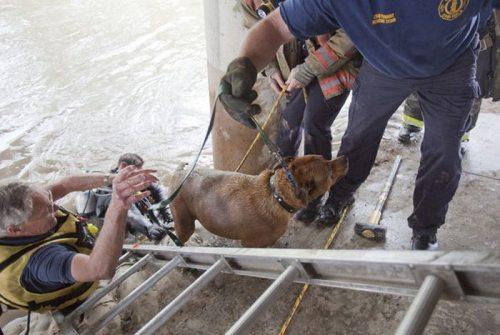 Η ασυνήθιστη διάσωση ενός σκύλου (15)