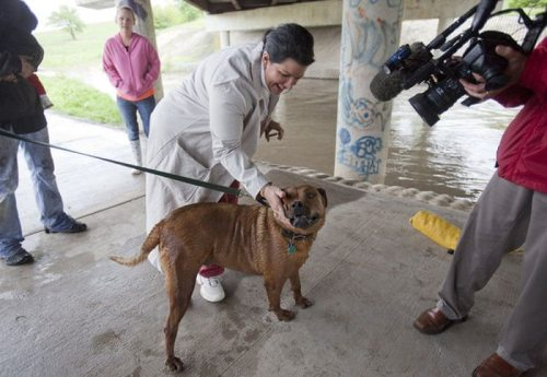 Η ασυνήθιστη διάσωση ενός σκύλου (18)