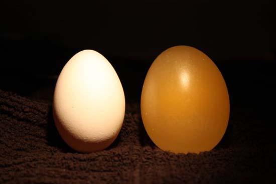 Ενδιαφέρον πείραμα: Αβγό μέσα σε ξύδι (11)