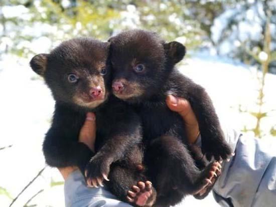 Αξιολάτρευτα μικροσκοπικά ζώα (13)