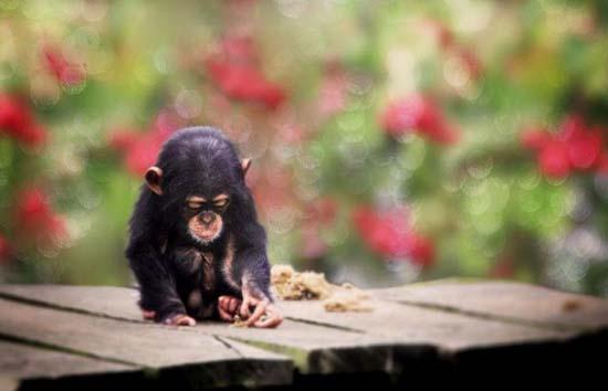 Αξιολάτρευτα μικροσκοπικά ζώα (14)