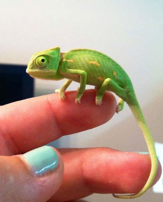 Αξιολάτρευτα μικροσκοπικά ζώα (16)