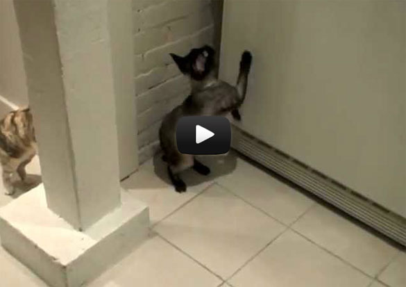 Γάτες Indiana Jones