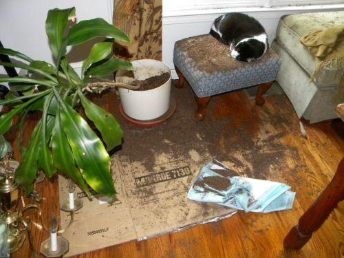 Όταν τα κατοικίδια έχουν καταστροφικές διαθέσεις (14)