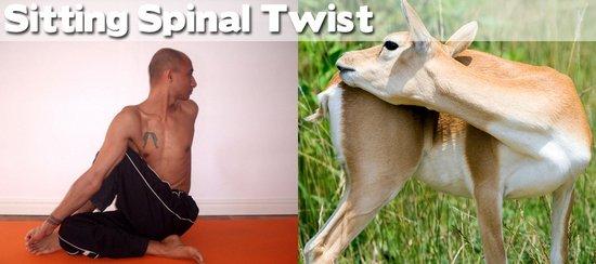 Όταν τα ζώα κάνουν μαθήματα Yoga (4)