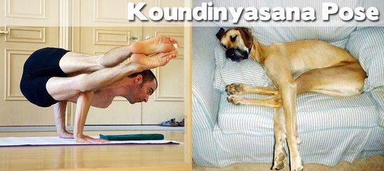 Όταν τα ζώα κάνουν μαθήματα Yoga (6)